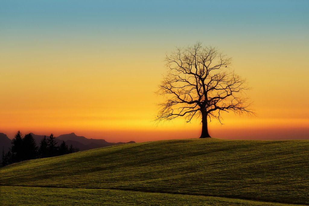 1本の木,父の姿