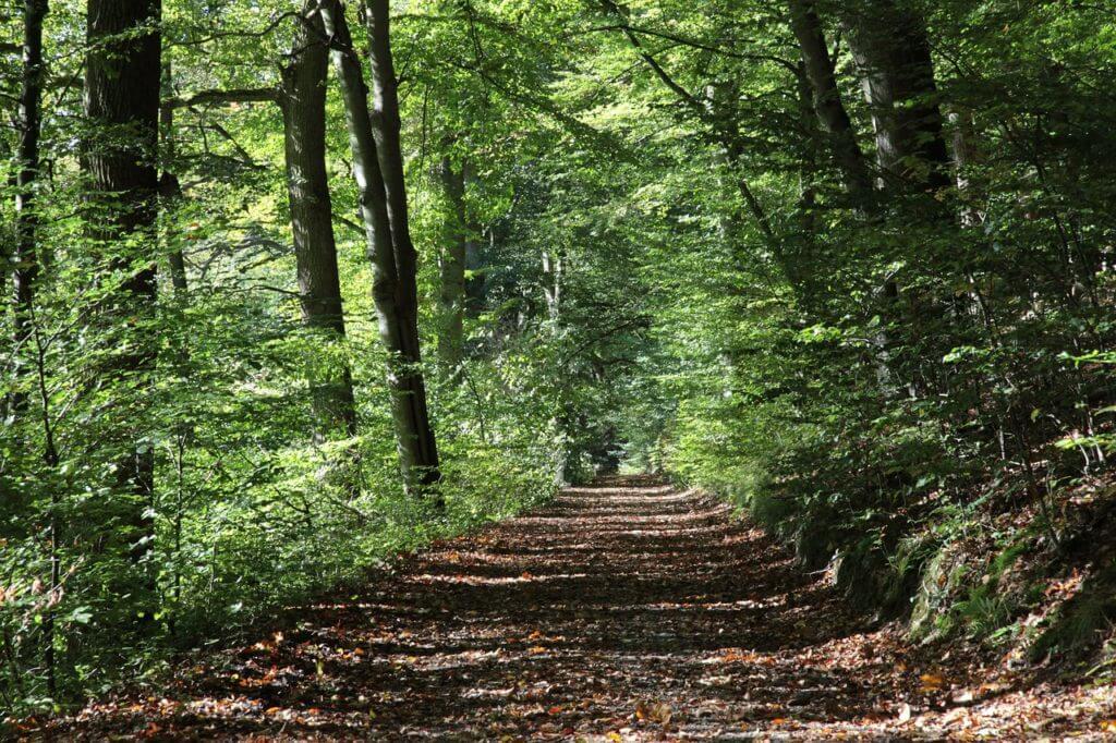 森,出口に続く道
