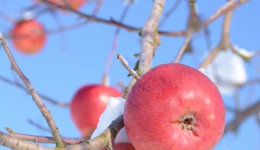 山形県朝日町のりんごは日本一!?幻のりんご・高徳や通販についても調査!
